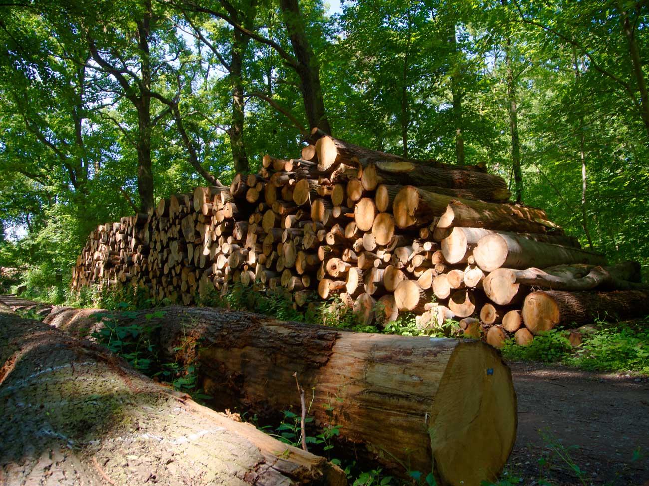 brennholz-dirk-wald-holz